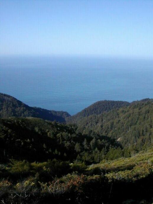 Oceano Floresta