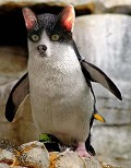 Pinguicat - Postal de Animais