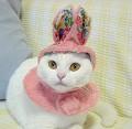 Gato coelho - Postal de Animais