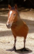 Horsebird - Postal de Animais