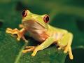 Bicho verde - Postal de Animais