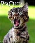 Gato Selvagem - Postal de Divertimento