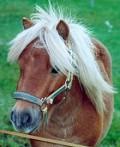Pony - Postal de Animais