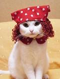 Capuchino gato - Postal de Animais