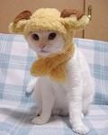 Gato carneiro - Postal de Animais