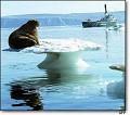 Leão marinho - Postal de Animais