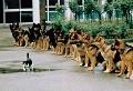 Parada - Postal de Animais