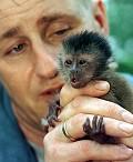 Macaco + pequeno - Postal de Animais