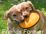 Cães Amigos - Postal de Amizade