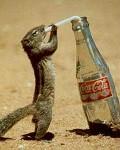 Enjoy Coca - Postal de Animais