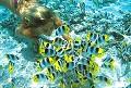 Peixinhos - Postal de Animais