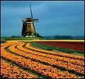 Flores e moinho de vento - Postal de Paisagens