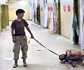 MAIO 2004 / Iraque