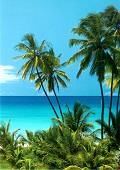Living in paradise - Postal de Paisagens