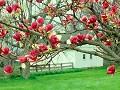 Primavera - Postal de Paisagens