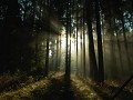 Bosque 2 - Postal de Paisagens