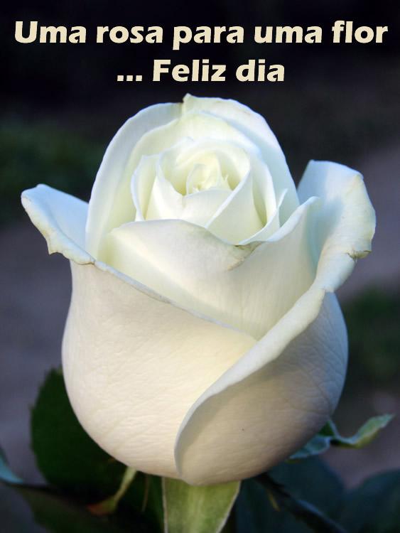 Uma rosa para ti!
