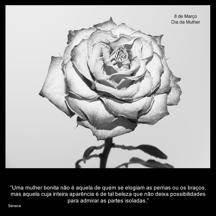 http://download.postais.net/images/postais/rosa_mulher.jpg